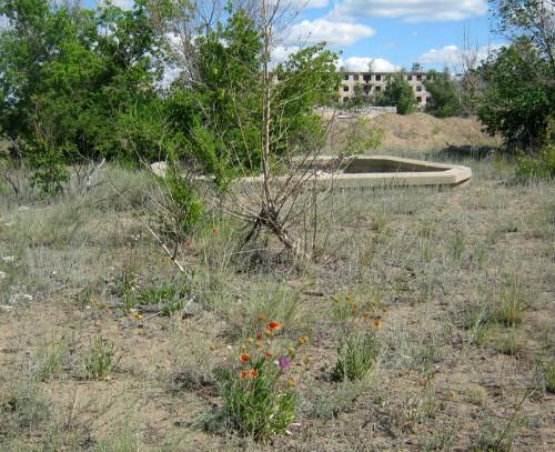 Детский сад во второй корбке. Бассейн и цветы. Июль 2011