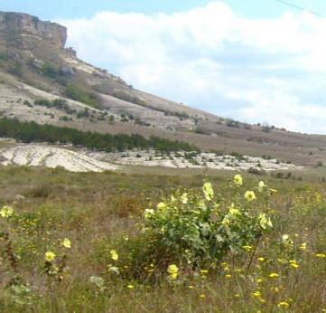 Цветы Белой Скалы