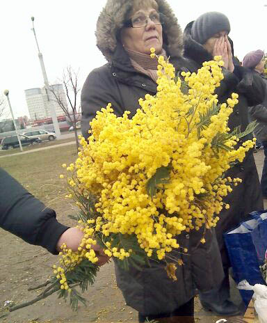 Мимозы на 8 марта Chagan-tranzit.ru